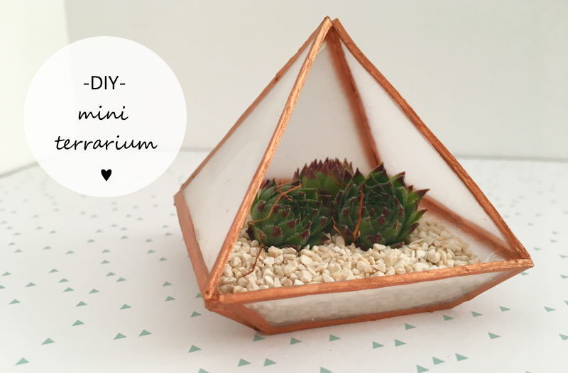 Medium diy mini terrarium