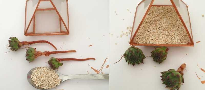 Medium remplir mini terrarium