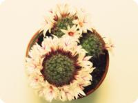 Avatar florcactus